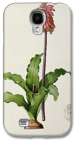 Veltheimia Capensis Galaxy S4 Case