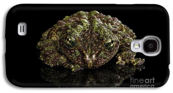Vietnamese Mossy Frog, Theloderma Corticale Or Tonkin Bug-eyed Frog, Isolated On Black Background Galaxy S4 Case