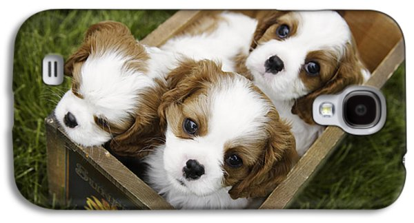 View From Above Of Three Puppies Galaxy S4 Case by Gillham Studios