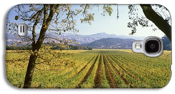 Vines In A Vineyard, Far Niente Winery Galaxy S4 Case by Panoramic Images