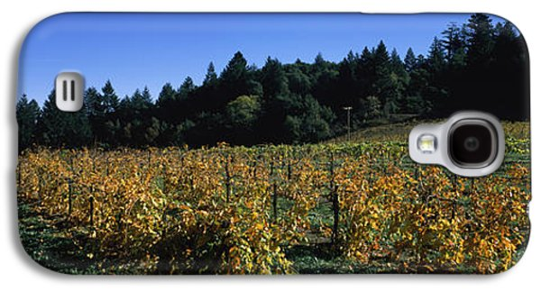 Vineyard In Fall, Sonoma County Galaxy S4 Case by Panoramic Images