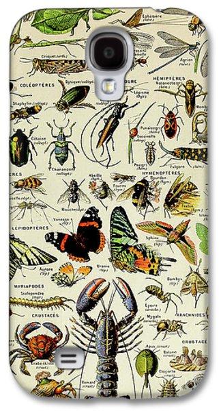 Vintage Illustration Of Various Invertebrates Galaxy S4 Case