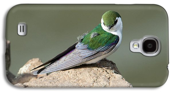 Violet-green Swallow Galaxy S4 Case by Mike Dawson
