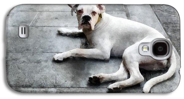 Volterra Italy Dog Galaxy S4 Case by Edward Fielding