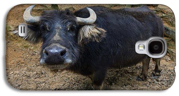 Water Buffalo On Dry Land Galaxy S4 Case
