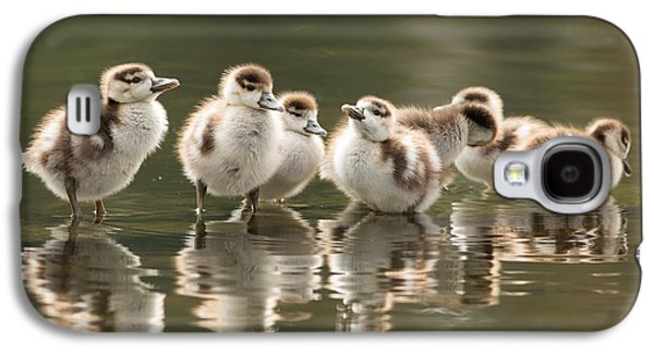 We Are Family - Seven Egytean Goslings In A Row Galaxy S4 Case by Roeselien Raimond