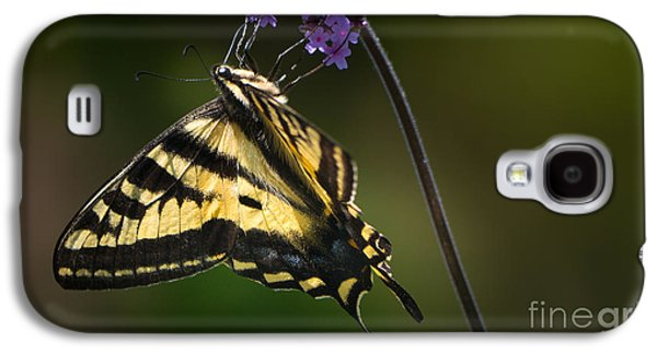 Western Tiger Swallowtail Butterfly On Purble Verbena Galaxy S4 Case