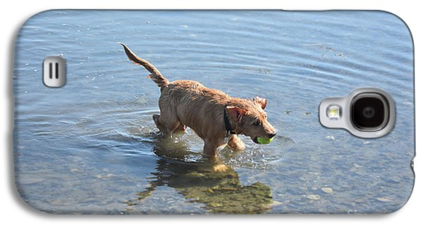 Wet Dog In Shallow Water With A Yellow Tennis Ball Galaxy S4 Case by DejaVu Designs