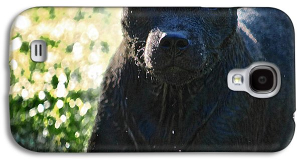 Wet Pup Staffordshire Bullterrier Galaxy S4 Case by Shaun Poole