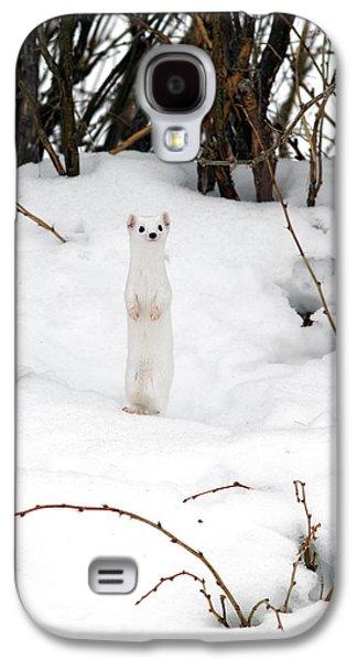 White Ermine Galaxy S4 Case by Leland D Howard