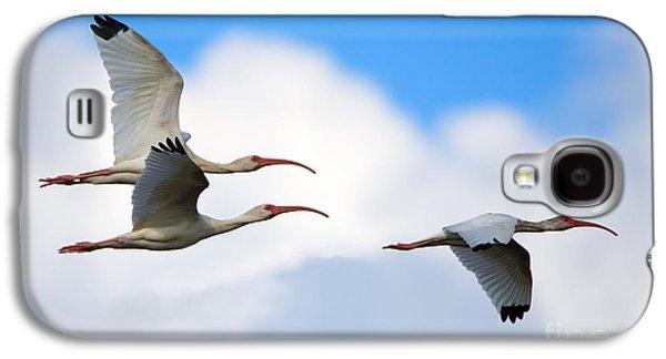 White Ibis Flock Galaxy S4 Case