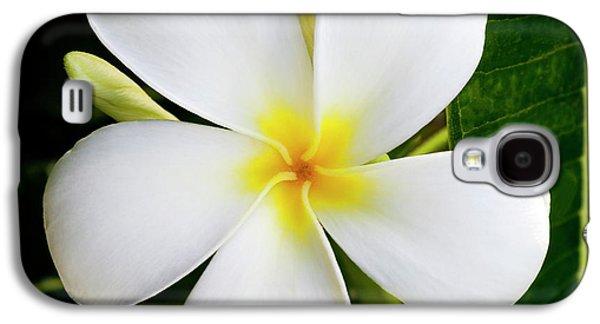 White Plumeria Galaxy S4 Case