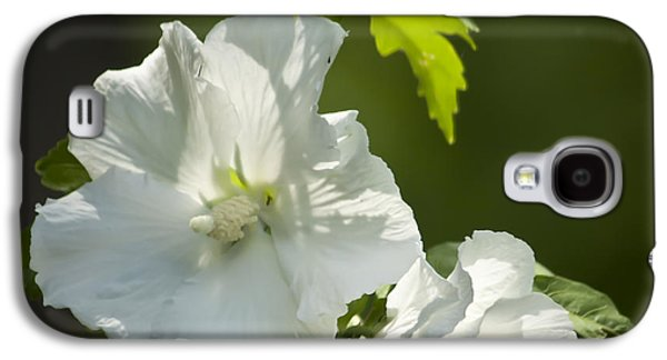 White Rose Of Sharon Squared Galaxy S4 Case