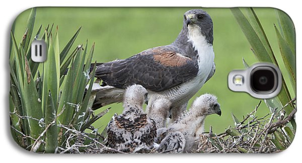 White-tailed Hawks Galaxy S4 Case by Anthony Mercieca