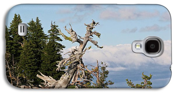 Survivor Art Galaxy S4 Cases - Whitebark Pine at Crater Lakes rim - Oregon Galaxy S4 Case by Christine Till