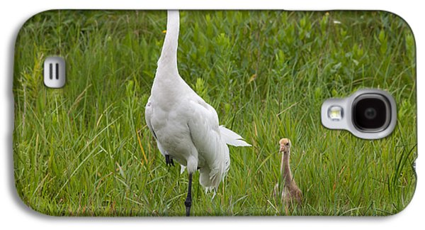 Whooping Crane And Chick Galaxy S4 Case by Scott Nelson