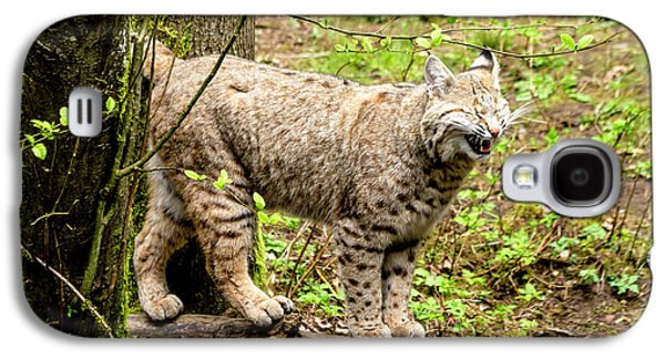 Wild Bobcat In Mountain Setting Galaxy S4 Case by Teri Virbickis