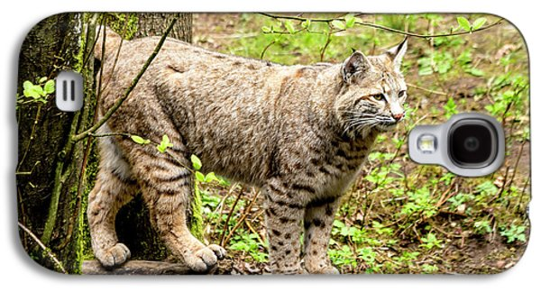 Wild Bobcat Galaxy S4 Case by Teri Virbickis