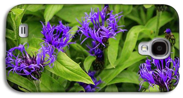 Wild Cornflowers In Iceland Galaxy S4 Case by Venetia Featherstone-Witty