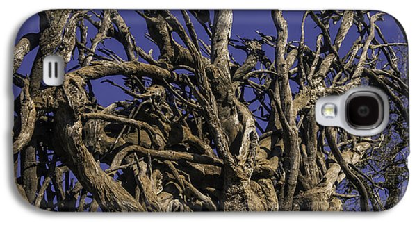 Wild Tangled Tree Roots Galaxy S4 Case by Garry Gay