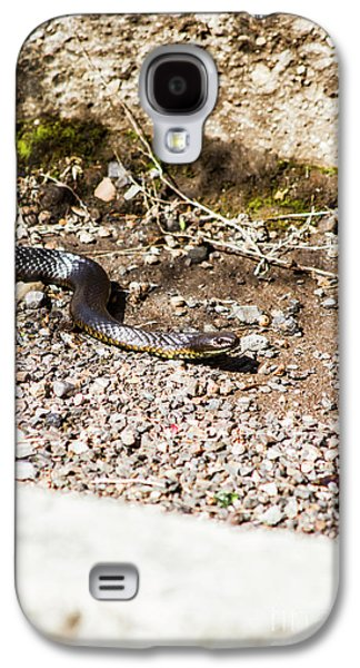 Wild Tiger Snake Galaxy S4 Case by Jorgo Photography - Wall Art Gallery