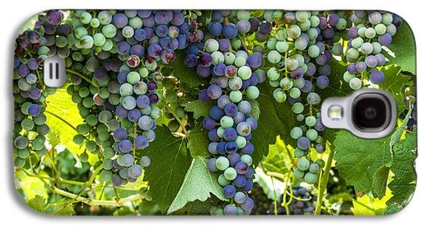 Wine Grape Colors Galaxy S4 Case
