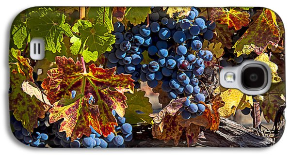 Wine Grapes Napa Valley Galaxy S4 Case by Garry Gay