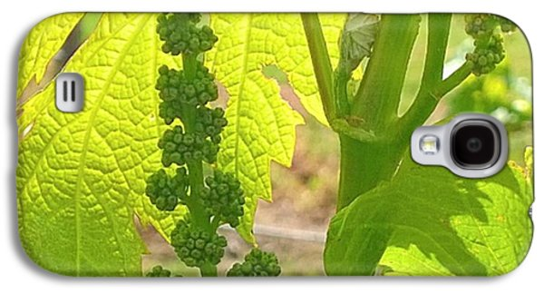 Orange Galaxy S4 Case - #wine On The #vine 😊 #vineyard by Shari Warren