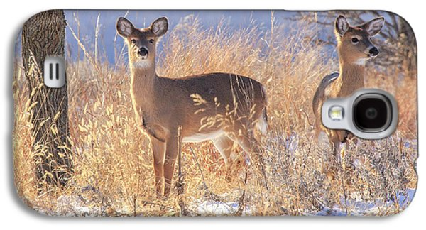 Winter Deer Galaxy S4 Case by Jill Van Doren Rolo