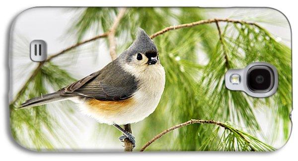 Winter Pine Bird Galaxy S4 Case