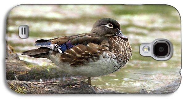 Wood Duck Hen Galaxy S4 Case