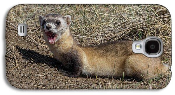 Yawning Black-footed Ferret Galaxy S4 Case by Tony Hake
