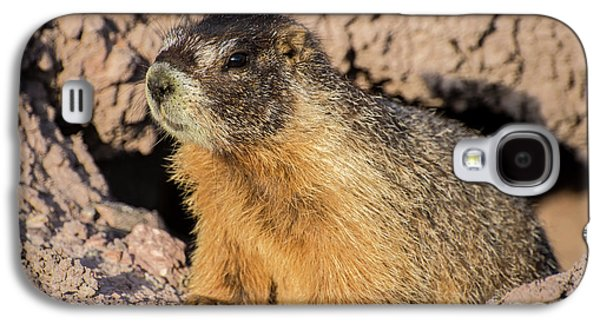 Yellow-bellied Marmot - Capitol Reef National Park Galaxy S4 Case by Gary Whitton