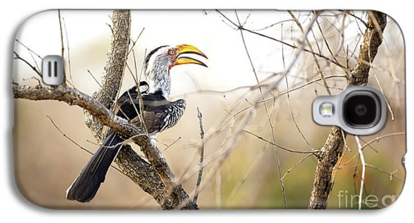 Yellow-billed Hornbill Sitting In A Tree.  Galaxy S4 Case by Jane Rix