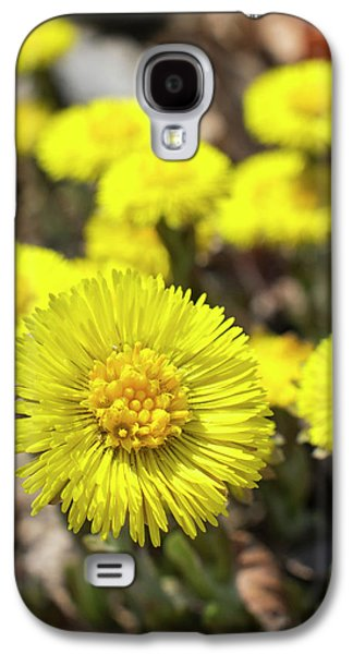 Yellow Coltsfoot Flowers Galaxy S4 Case by Christina Rollo