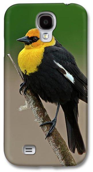 Yellow Headed Blackbird Galaxy S4 Case