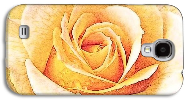 Galaxy S4 Case featuring the photograph Yellow Rose by Karen Shackles