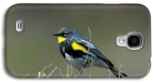 Warbler Galaxy S4 Case - Yellow-rumped Warbler by Mike Dawson