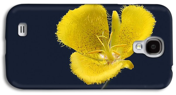 Lily Galaxy S4 Case - Yellow Star Tulip - Calochortus Monophyllus by Christine Till