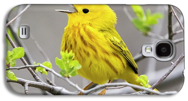 Yellow Warbler  Galaxy S4 Case
