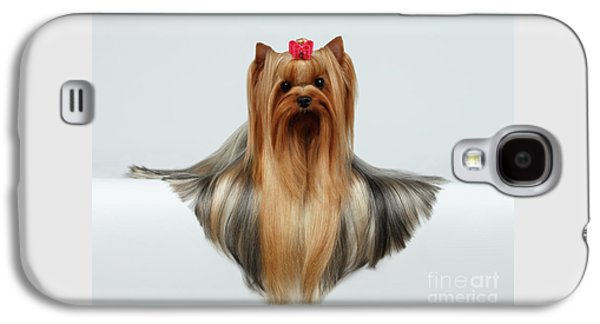 Yorkshire Terrier Dog With Long Groomed Hair Lying On White  Galaxy S4 Case by Sergey Taran