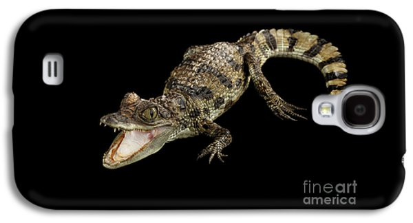 Young Cayman Crocodile, Reptile With Opened Mouth And Waved Tail Isolated On Black Background In Top Galaxy S4 Case by Sergey Taran
