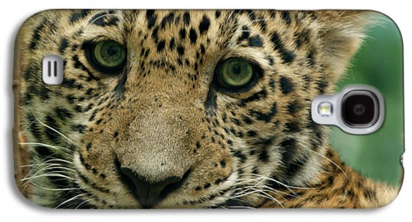 Young Jaguar Galaxy S4 Case by Sandy Keeton