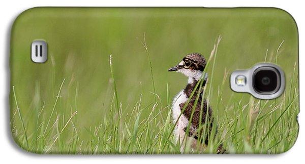Killdeer Galaxy S4 Case - Young Killdeer In Grass by Mark Duffy