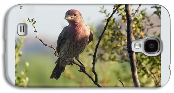 Young Male House Finch Galaxy S4 Case