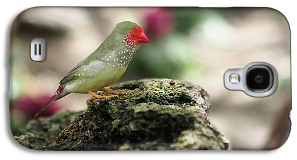 Young Star Finch Galaxy S4 Case by Rona Black