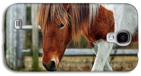 Galaxy S4 Case featuring the photograph Assateague Wild Horse Susi Sole N2bhs-m by Bill Swartwout Fine Art Photography