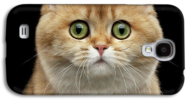 Cat Galaxy S4 Case - Close-up Portrait Of Golden British Cat With Green Eyes by Sergey Taran