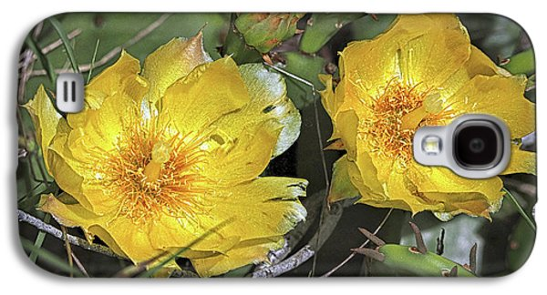 Galaxy S4 Case featuring the photograph Eastern Prickley Pear Cactus Flower On Assateague Island by Bill Swartwout Fine Art Photography