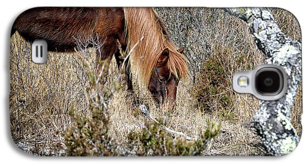 Galaxy S4 Case featuring the photograph Lunchtime For Assateague's Gokey Go Go Bones by Bill Swartwout Fine Art Photography